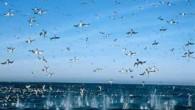 Yunus sürüleri, balinalar, foklar, penguenler. Oceans filmi sualtının gizemli dünyasında yolculuğa çıkartıyor. Yunus sürüleri, balinalar, foklar, penguenler. Oceans filmi sualtının gizemli dünyasında yolculuğa çıkartıyor. 45 Milyon Sterlin'e mal olan filmin...