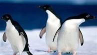 Daily Telegraph'taki habere göre, penguenlerin, fotoğraf çekilmeden önce üstlerini başlarını düzelttikleri gözlemlendi. Manchester'dan web tasarımcısı Adam Foster, geçen ay Chester hayvanat bahçesini ziyaretinde bir erkek ve dişi penguene yaklaştığında, penguenlerin...