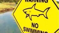 Avustralya'da, sel yüzünden okyanusa bağlanan göle 6 köpekbalığı girdi. Sel suları çekilince köpekbalıkları gölde yaşamaya başladı. HAZİRAN'daki büyük sel felaketinin yaralarını sarmaya çalışan Avustralya'nın Brisbane kenti, Büyük Okyanus sularının taşıdığı...