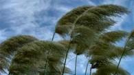 Buraya kadar rüzgarların nasıl izobarlarla paralel olarak estikleri açıklanmış bulunmaktadır. Bundan sonra sürtünme nedeniyle rüzgar üzerinde değişiklikler olacaktır. Prensip olarak yeryüzeyi, sürtünme dolayısıyla rüzgar hızını azaltacak bir etki yapar. Ayrıca...