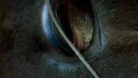 Eye detail of a Sparisoma cretense – Parrotfish caught in a net. Bir kaç gün önce gelen bir e-posta beni o kadar sevindirdi ki inanmazsınız. Burada paylaşmadan edemedim Saygılar, sevgiler...
