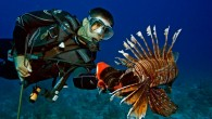 Let's face the facts. Lionfish were introduced into the Atlantic ecosystem by humans. Thus, it becomes the responsibility of humans to clean up this mess. Thankfully there are several ways...