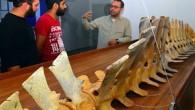 Sarıgerme sahiline 2009 yılında vuran 5 metre uzunluğundaki balinanın iskeleti kumdan çıkarılarak iki yıl süren çalışmayla parçaları birleştirildi ve temizlendi. Muğla Sıtkı Koçman Üniversitesi Su Ürünleri Fakültesi Su Ürünleri Temel...
