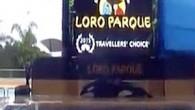 İspanya'ya bağlı Kanarya Adaları'nda bulunan Loro Parque adlı su parkındaki balinanın intihar etme girişiminde bulunduğu görüntüler yürek burktu. İspanya'ya bağlı Kanarya Adaları'nda bulunan Loro Parque adlı su parkında bir katil...