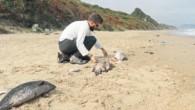TÜDAV, Karadeniz'de canlı türlerini korumak için halkla işbirliği sağlayan bir proje başlattı. 'Gözüm Sende Karadeniz' isimli projeyle, akıllı telefonlardaki uygulama üzerinden çalışmalara veri sağlanabilecek Dünyanın en büyük oksijensiz su kütlesini...