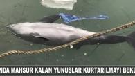 Zonguldak'ın Alaplı ilçesinde sürüden ayrılarak kaybolan ve balıkçı barınağında mahsur kalan yaklaşık 10 yunustan 2′si öldü. Alınan bilgilere göre, geçen hafta yunus sürüsünden ayrılarak yolunu şaşıran ve balıkçı barınağına giren...