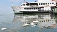 İzmir Büyükşehir Belediyesi tarafından 'Yüzülebilir Körfez Projesi' kapsamında çalışma sürerken, Kordon boyundaki deniz kirliliği kente yakışmayan görüntüler oluşturdu. SAHİL KEYFİNİN TADI KAÇTI Pasaport bölgesinde her türlü çöp, yosunların arasında denizin...