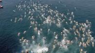 """Dünyada kıtalararası yüzülen tek yarış olan ve geçtiğimiz yıl Dünya Açık Su Yüzme Birliği (WOWSA) tarafından """"Dünyanın En İyi Açık Su Yüzme Organizasyonu"""" seçilen Samsung Boğaziçi Kıtalararası Yüzme Yarışı yarın..."""