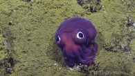 You may have seen a ridiculously cute googly-eyed squid or mysterious purple orb pop up on your Facebook feed or a news broadcast at some point this past year. If...