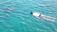Muğla'nın Marmaris İlçesi'ndeki Kadırga Koyu'nda tekne turlarıyla gezip denize girenler Caretta Caretta ile yüzdü. Bodrum'da Caretta Caretta cinsi deniz kaplumbağasının yüzenlere saldırması tedirginlik yaratırken Marmaris'te bugün tam tersi bir durum...