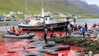 Faroe Adalarında yine kanlı balina avı görüntüleri geldi. Sea Shepherd Conservation Society (Deniz Çobanı Koruma Derneği) tarafından paylaşılan görüntülerde onlarca yunusun kanlar içinde kıyıdaki hali görünüyor. Pilot balinalar her yıl...