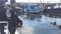 İSTANBUL (AA) – Tekirdağ Emniyet Müdürlüğü Deniz Limanı Şube Müdürlüğü ekipleri, balıkçılar tarafından deniz altına saklanmış trol ağlarını ve trol kapaklarını ortaya çıkardı. Deniz polisi, yavru balık avının en önemli...