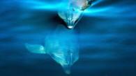 Çok teşekkür ederim. Sizleri balina ve yunusların sualtı akustik dünyasına doğru bir yolculuğa çıkarmaya çalışacağım. Bizler öyle görsel bir türüz ki bunu gerçekten anlamak bizim için çok zor. Bu yüzden...