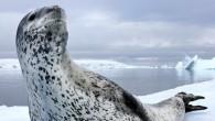 Kutup uzmanı olma, yani kutup bölgelerinde yoğunlaşıp oralarda fotoğraf çekme yolculuğum ben dört yaşındayken ailemin Güney Kanada'dan Grönland yakınlarındaki Baffin Adası'na taşınmasıyla başladı. Orada Inuit halkıyla birlikte yaşadık. 200 kişilik...