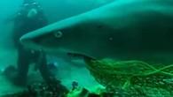 Avustralya'da bir köpek balığını ağzına takılan ağdan kurtaran dalgıca PETA tarafından 'Hayvanların Kahramanı' ödülü verildi. Uluslararası hayvan hakları örgütü PETA (Hayvanlara Etik Muamele İçin Mücadele Edenler), hayatını riske atarak köpek...
