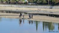 Seyhan Nehri'nde suların çekilmesiyle oksijensiz kalan balıklar su yüzüne çıkmaya başladı. Durumu fırsat bilenler balıkları avlamak için nehir yatağına akın etti. Adana'da Seyhan Nehri'nde suların çekilmesiyle oluşan su birikintilerinde oksijensiz...