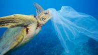 Deniz canlılarının tek kullanımlık plastiklerden etkilenme oranına yönelik bir inceleme, plastik kullanımının canlılar üzerindeki ölümcül etkisini gözler önüne serdi. Greenpeace Araştırma Laboratuvarları'nın, farklı üniversitelerden bilim insanları ile birlikte yaptığı çalışma...