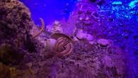 Antalya Kaleiçi Yat Limanı'nda hizmet veren Büyükşehir Belediyesi'ne ait Türkiye'nin ilk Deniz Biyolojisi Müzesi 5 yılda 25 bin ziyaretçiye ev sahipliği yaptı. Büyükşehir Belediyesi'nin Antalya'yı denizle barışık bir kent yapma...