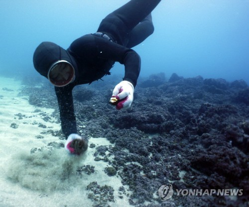 In this undated file photo, a woman diver, or haenyeo, picks up seafood from the ocean floor. (Yonhap)