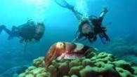 Alınan bilgiye göre, Antalya İl Kültür ve Turizm Müdürlüğü'nün teklifi ile alınan karar doğrultusunda, 32 noktadan çıkış yapmak ve kıyıdan denize doğru 15 metre eninde 200 metre uzunluğunda giriş çıkış...