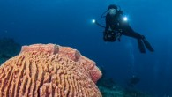 No, I'm not talking about the mushroom islands of Palau and the magical underwater. It's the sort of mushroom that is said to guarantee a ticket to heaven, or moon,...