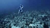 """Sualtı dünyası yeryüzünde olmakla birlikte bizlere bambaşka bir dünya sunuyor. Dünya serbest dalış rekortmeni Neri'nin """" Okyanusta Yer Çekimi """" adlı video çalışması ile görenleri hem şaşırtmayı hem de hayran bırakmayı başardı. Fransız Polinezyası'ndaki en büyük adası Tahiti'nin 355 km […]"""