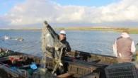 Salur ve Çevre Mahalleler Su Ürünleri Kooperatifi Başkanı Bayram Karabulut, yaptığı açıklamada, kooperatif üyeleri tarafından avlanan balıkların özellikle Kuzey Irak'a ihraç edildiğini söyledi. Kooperatife kayıtlı 101 balıkçının bulunduğunu belirten Bayram Karabulut, şunları kaydetti: 'Balıkçılar sabah çıktıkları Manyas Gölü'nden öğle saatlerinde […]