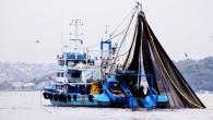 Palamuta doyduk ama diğer balıklar tezgâhta el yaktı. Uzmanlar ise balık çeşitliliğindeki azalmadan ve halen küçük balıkların avlanmasından endişe duyuyor. Denizlerimizde 1 Eylül'de başlayan balık avı sezonu bugün gece yarısı sona eriyor. 227 gün boyunca denizlere salınan gırgır ve trol […]