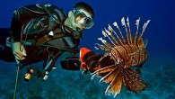 Reef Environmental Education Foundation is to present the final leg of its 2018 Florida Lionfish Derby Series Friday through Sunday, Sept. 14-16, at John Pennekamp Coral Reef State Park in...