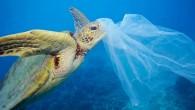Plastik kirliliği birçok canlı türünü kötü etkilemeye, hatta öldürmeye devam ediyor. Bir yandan da ekolojik döngüyü bozarak besin zincirini olumsuz etkiliyor. Tazmanya Üniversitesi'nden bilim insanları plastik kirliliği nedeniyle midelerine plastik...