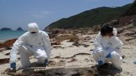 A severely decomposed finless porpoise was found stranded at Sai Wan Village in Sai Kung. Ocean Park Conservation Foundation, Hong Kong responded to a stranded finless porpoise case today, with that being the 19th case of this year. The carcass […]