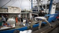 Above: Fishing boat captain Nick Haworth, right, carries tuna to a dock for sale Friday, March 20, 2020, in San Diego. Haworth came home to California after weeks at sea to find a state all but shuttered due to coronavirus […]
