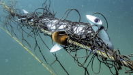 Two NSW councils are calling on the state government to remove shark nets on beaches along the coast. Last night both the Northern Beaches and Newcastle councils voted for the nets to be replaced with alternatives that don't trap other […]