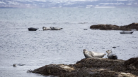 by Owen Tyrie The boards of both Landvernd and the Icelandic Natural History Society have sent a stern letter to both the Minister of Environment and National Resources, Guðmundur Ingi Guðbjartsson, and Minister of Fisheries and Agriculture, Kristján Þór Júlíusson […]