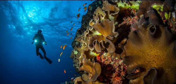 """https://sufod.org.tr/sanal-sergi/ Değerli üyelerimiz, Siz üyelerimizin su altı fotoğraflarından oluşan """"SUFOD Sanal Su Altı Fotoğraf Sergisi""""nin ilkinin açılışını yapıyoruz. Konusu """"Dünya Denizlerinden"""" olan sergimizin 22 Mayıs'ta yapılması gereken açılışını, Marmara Denizi'ndeki Müsilaj sorunu sunumunu, güncelliği nedeniyle öne çekmek zorunda kaldığımızdan 29 […]"""