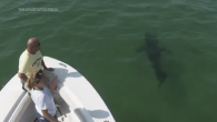 A great white shark glides gracefully off the Massachusetts' coast of Cape Cod, a popular summer tourist destination that is now embracing the presence of the apex marine predators. Michael Simard crouches on the bow of a shark-sighting boat while […]