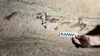 (CNN) — Kentucky's Mammoth Cave National Park is a long way from the ocean, but newly discovered fossils suggest the area was once teeming with sharks. Scientists have identified the remains of 15 to 20 different species of sharks deep […]