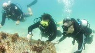 Divers will plant 15 artificial reefs off the UAE coastline near Dibba in June to encourage the regeneration of marine ecosystems. The areas were damaged by dredging and ocean degradation. Volunteers from the Freestyle Divers' Marine Conservation Academy will visit […]